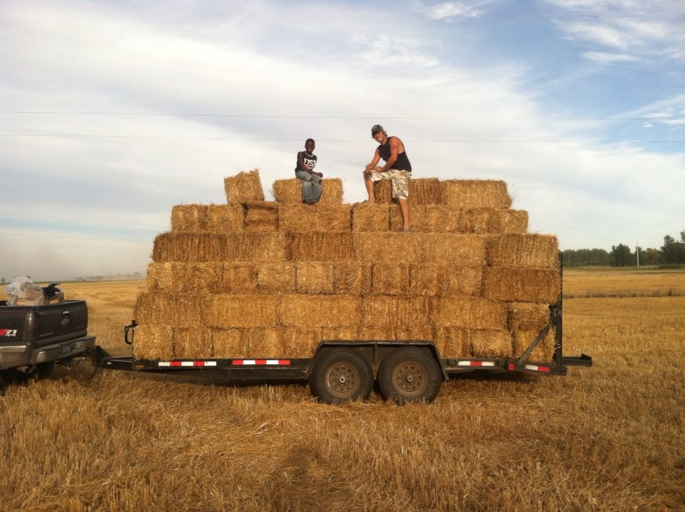 Hauling hay develops great work ethic.